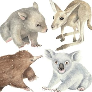 Ginger Monkey Australian Baby Animal Decal Set